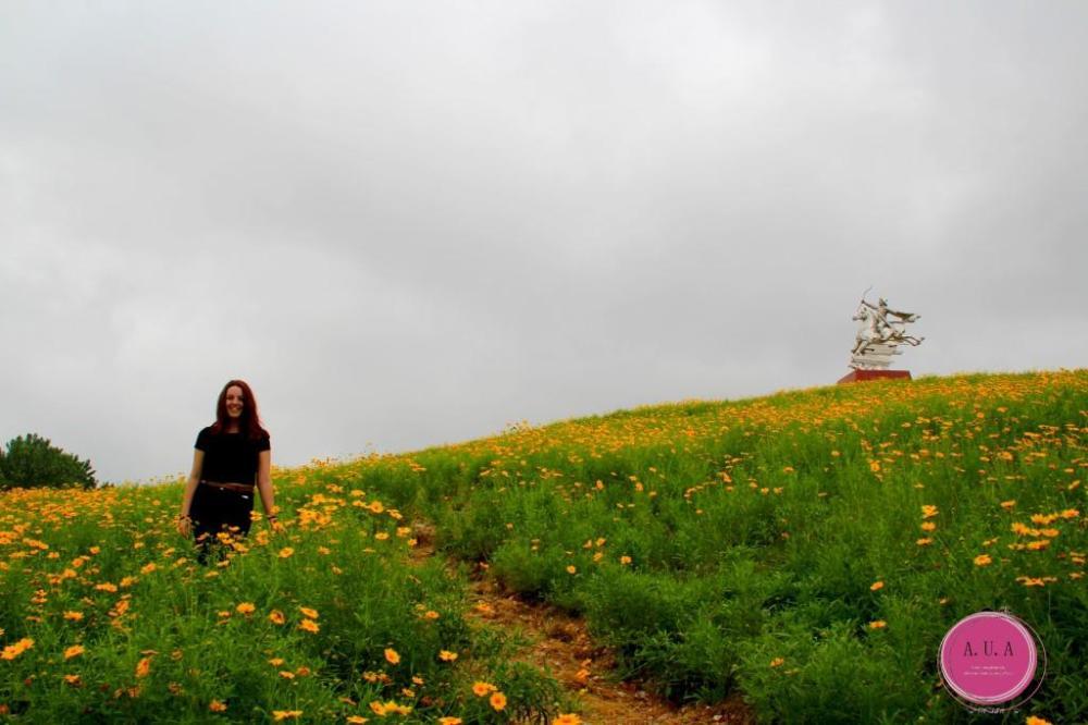 champs de fleurs jaune chine coline